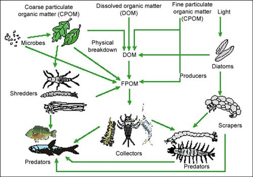 1Y2P0IJ32E5KJFOOD_WEB_500__1__1 aquatic systems food chains and webs limpopo river awareness kit